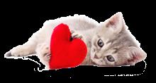 amore-gatti